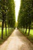 Aléia no parque, Arkhangelskoe foto de stock royalty free