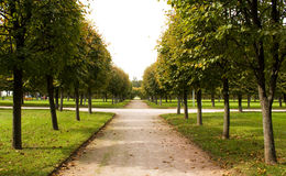 Aléia no parque, Arkhangelskoe Imagens de Stock