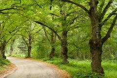 Aléia verde da árvore Fotografia de Stock
