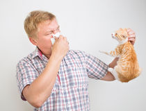 Alérgico aos animais Foto de Stock