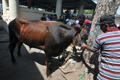 Al Adha Ied в Индонезии Стоковое Изображение RF