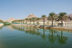 Al Ain City. Zakher Area in Al-Ain City Showing the Palm Trees near A Water Canal Royalty Free Stock Photos
