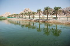 Al Ain City. Zakher Area in Al-Ain City Showing the Palm Trees near A Water Canal Stock Images