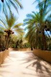 Al Ain oasis Stock Images