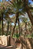 Al Ain Oasis Stock Photos
