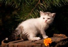 Al aire libre de dos meses del gatito lindo Foto de archivo