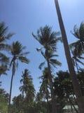 Al aire libre en la isla de jeju Foto de archivo