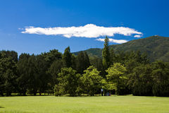 Al aire libre ponga verde el paisaje Fotografía de archivo libre de regalías