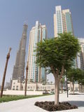 Al Burj, the Tower in DUbai, UAE. The highest tower of the world, as it is being built, contrast with the tree in the foreground and other buildings already Stock Images