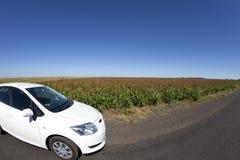 Al campo di cereale Immagine Stock