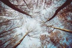 Al cielo Fotos de archivo libres de regalías