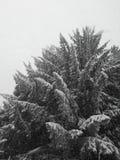 Al cielo Foto de archivo libre de regalías
