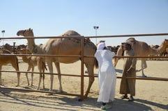 Al Dhafra Camel Festival in Abu Dhabi. ABU DHABI, UNITED ARAB EMIRATES - DEC 27, 2015: A group of camel auctioneers at Al Dhafra Camel Festival in Al Gharbia Stock Image
