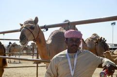 Al Dhafra Camel Festival in Abu Dhabi. ABU DHABI, UNITED ARAB EMIRATES - DEC 27, 2015: Man and camel Al Dhafra Camel Festival in Al Gharbia, Abu Dhabi, UAE Stock Photography