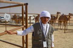 Al Dhafra Camel Festival in Abu Dhabi. ABU DHABI, UNITED ARAB EMIRATES - DEC 27, 2015: Young boy at the aviary with camels on backgroung at Al Dhafra Camel stock photos