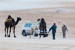 Al Dhafra Camel Festival en Abu Dhabi Foto de archivo libre de regalías