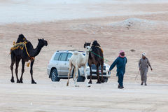 Al Dhafra Camel Festival i Abu Dhabi Royaltyfri Foto