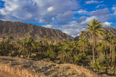 Al Guentra's oasis Royalty Free Stock Images