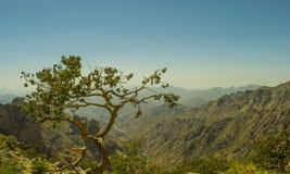 Al Hada Mountain in Taif-Stad Royalty-vrije Stock Foto's