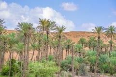 绿洲Al Haway阿曼 免版税图库摄影