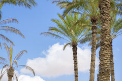 Al Haway Ομάν οάσεων Στοκ φωτογραφίες με δικαίωμα ελεύθερης χρήσης