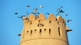 Al Jahili Fort Stock Image