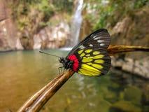Al lado de la cascada, una mariposa hermosa Imágenes de archivo libres de regalías
