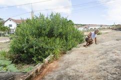 Al lado del árbol de Gungo la mujer apoya el cuerpo para subir fotos de archivo