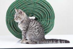 Al lado del gatito que se sienta al lado del lado de la cuerda Fotografía de archivo