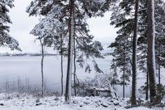 Al lado del lago en la primera vez de la nieve Fotografía de archivo
