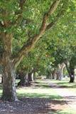 Al parco Immagine Stock
