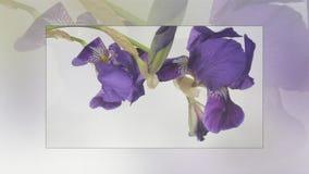 Al rallentatore di fioritura dei fiori video d archivio
