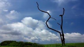 Al rallentatore di un albero del metallo su un campo stock footage