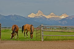 Al ranch Fotografie Stock Libere da Diritti