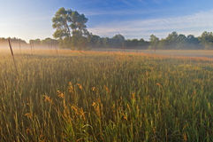 Al Sabo Meadow in Fog Stock Photography
