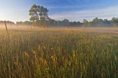 Al Sabo Meadow in Fog Stock Photography