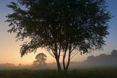 Al Sabo van de zonsopgang Weide Stock Fotografie