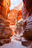 Al Siq Royalty Free Stock Photography