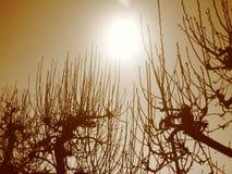 Al sol Fotografía de archivo