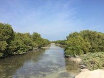 Al Thakhira mangrowe drzewa Zdjęcia Stock