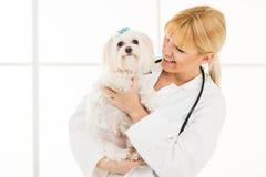 Al veterinario fotografia stock