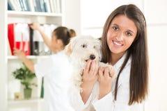 Al veterinario Immagini Stock Libere da Diritti