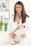 Al veterinario Fotografie Stock Libere da Diritti