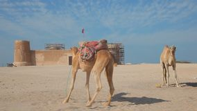 Al Zubara fort in Qatar stock video footage