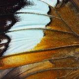 Ala anaranjada de la mariposa Imagen de archivo libre de regalías