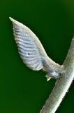Ala angelical Fotos de archivo