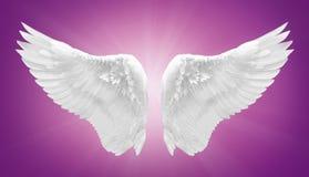 Ala bianca di angelo isolata Fotografie Stock Libere da Diritti