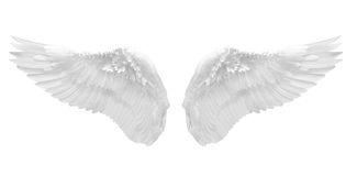 Ala bianca isolata Immagini Stock