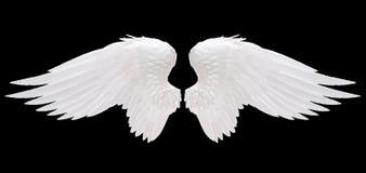 Ala blanca del ángel imagen de archivo libre de regalías