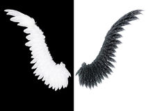 Ala blanca y negra Foto de archivo